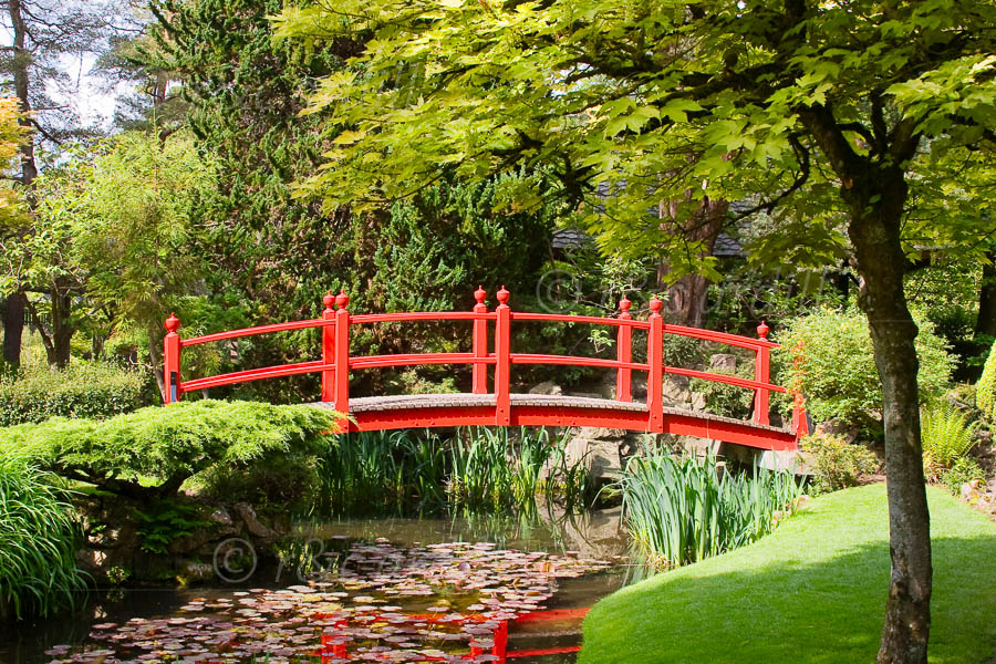 Photo of Kildare Japanese Gardens - M20707