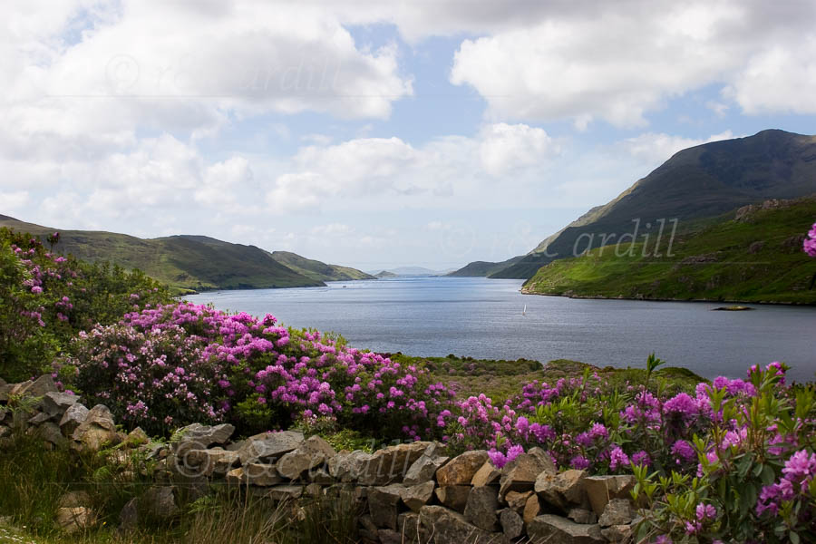 Photo of Killary Harbour - M22124