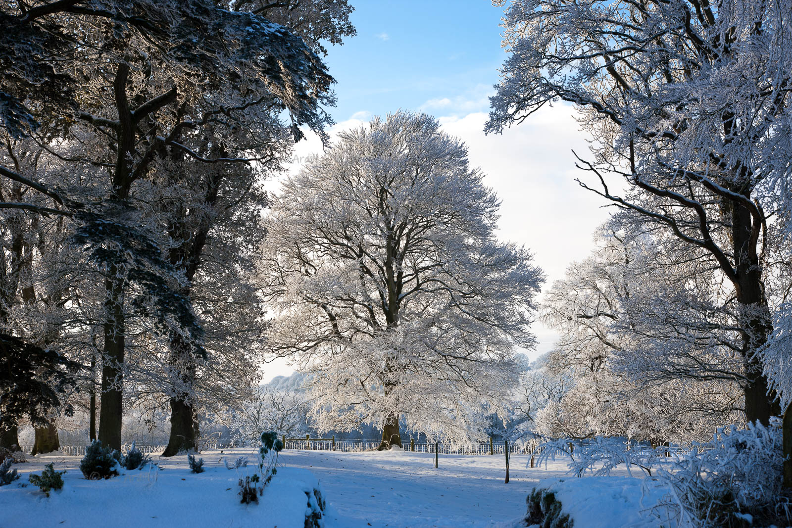 Photo of Meath Dalgan Park in Snow - T13715
