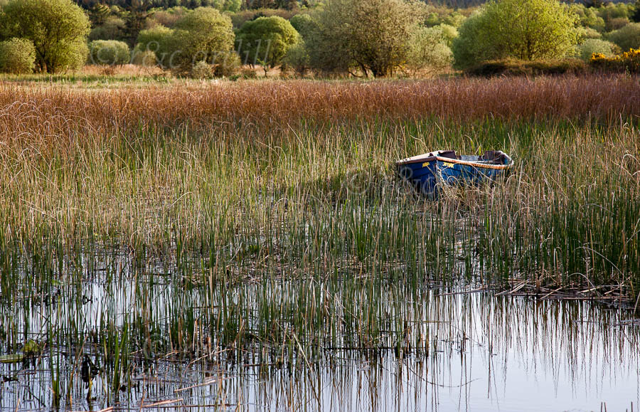 Photo of Clare Lough Derg Boat in Reeds - T25826