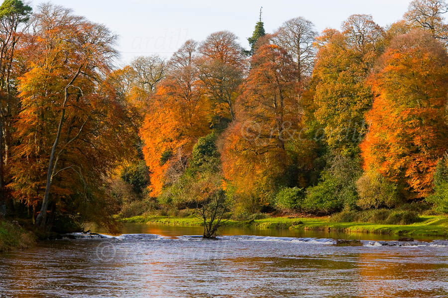 Photo of Boyne Autumn at Ardmulchan - W23896
