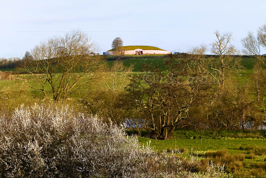 Photo of Newgrange with Hawthorn - W30366