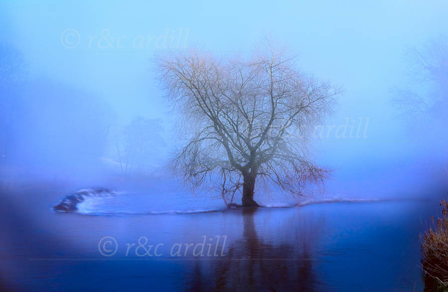 Photo of Boyne Ardmulchan Tree in Mist - W51206