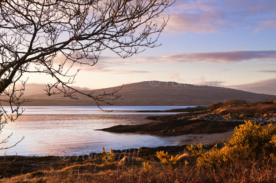 Photo of Dunmanus Bay at Dawn - W54755