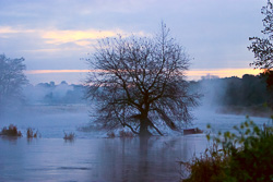 Photograph of Meath Boyne Weir and Tree - C01040