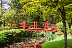 Photograph of Kildare Japanese Gardens - M20707