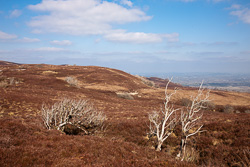 Photograph of Cuilcagh Mountains - T24875
