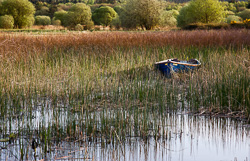 Photograph of Clare Lough Derg Boat in Reeds - T25826