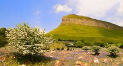Photograph of Ben Bulben Bluebells - W60984